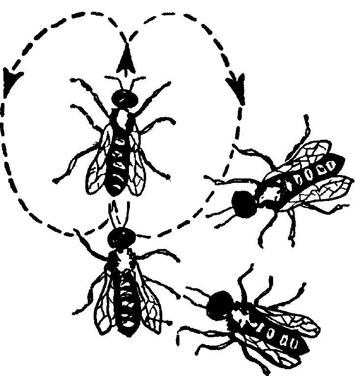 Пчелы, которые усиками
