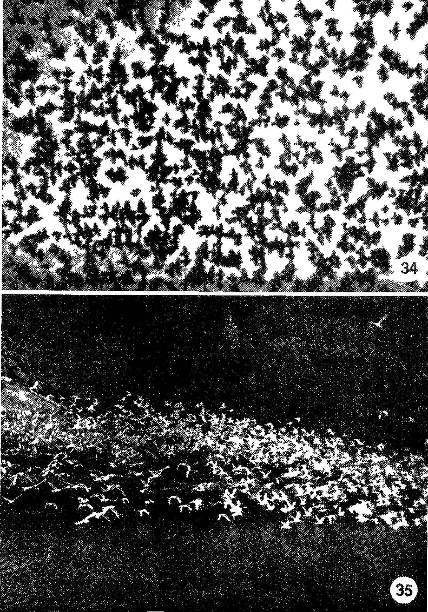 схема постройки домика для сторожа на пасеку